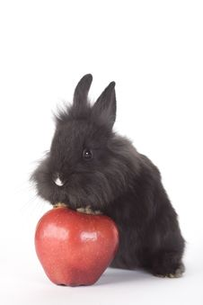 Free Black Bunny And An Red Apple, Isolated Royalty Free Stock Photography - 8199807