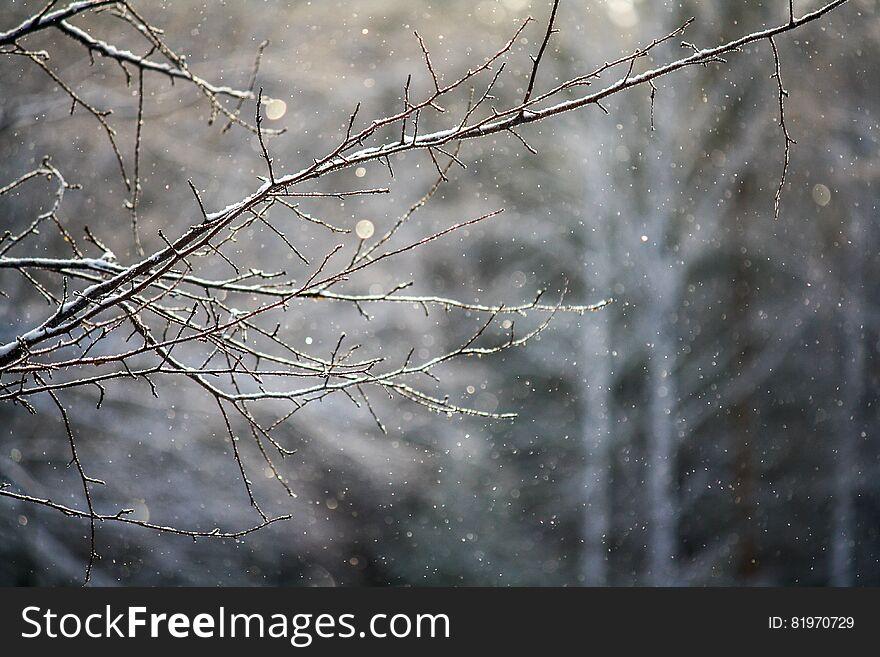 Bare winter branch