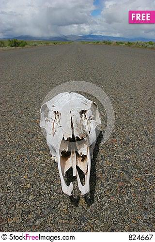 Free Skull In Desert Road Royalty Free Stock Photography - 824667