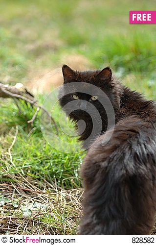 Free Black Pussy Stock Photography - 828582