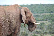 Free Elephant Drinking Stock Photo - 821170