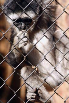 Free Baby Monkey Royalty Free Stock Photo - 821215