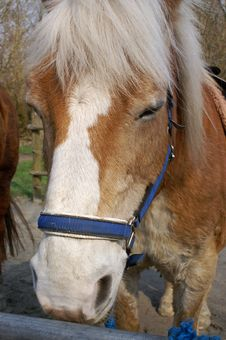 Horse Brown Head Stock Images