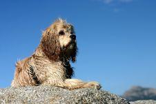Free Dog Royalty Free Stock Images - 823849