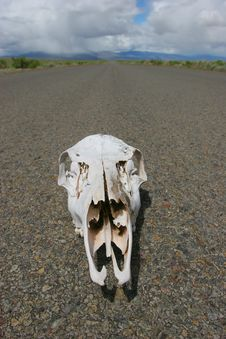 Free Skull In Desert Road Royalty Free Stock Photography - 824667