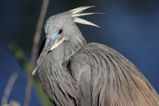 Free Cute Heron Stock Photography - 825292