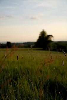 Free Grass Blows At Sundown Royalty Free Stock Photography - 826887