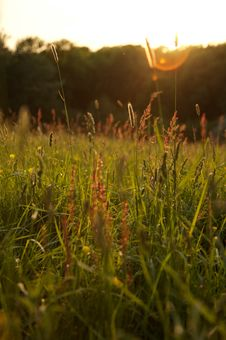 Free Medow Grass Sunshine Stock Photo - 826890
