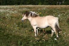 Free Danish Horses 01 Royalty Free Stock Photo - 827405