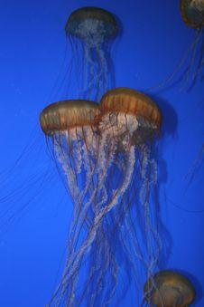 Free Monterey Aquarium 5 Stock Photography - 827872