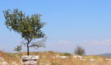 Free Ephesus Royalty Free Stock Photography - 828907