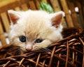 Free Nice Kitten In The Basket Stock Photos - 8200853