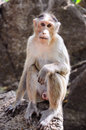 Free Wild Monkey Stare Onto The Camera (direct Look) Royalty Free Stock Photos - 8205988