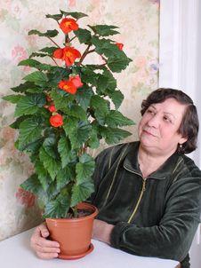 Free Room Flower Stock Image - 8200021
