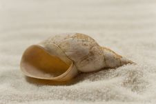 Free Seashell On The White Sand Royalty Free Stock Photography - 8200357
