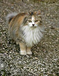 Free Cat Royalty Free Stock Photo - 8200665