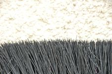 Free Fur Royalty Free Stock Images - 8200809