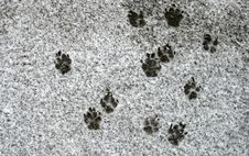 Free Dog S Footprints Stock Images - 8201304