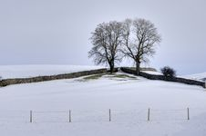 Snow, Fields, Drystone Walls And Two Trees Royalty Free Stock Images
