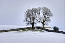 Snow, Fields, Drystone Walls And Two Trees Stock Image