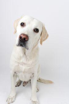 Free Dog Stock Photos - 8202063