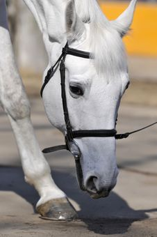 Free Horse Royalty Free Stock Photos - 8203428