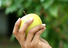 Free Fruit Stock Photo - 8203600