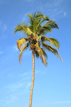 Free Lonely Palm Tree Over Sky Royalty Free Stock Photos - 8205258
