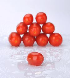 Free Small Tomatoes Royalty Free Stock Photo - 8205615