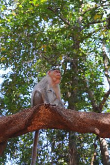 Free Small Baby Monkey On Tree Branch Royalty Free Stock Images - 8205949