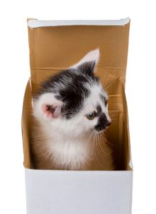 Free Baby Kitten In Box Royalty Free Stock Photography - 8205977