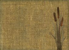 Free Rustic Canvas Texture With Bunch Of The Bulrush Stock Photography - 8206472