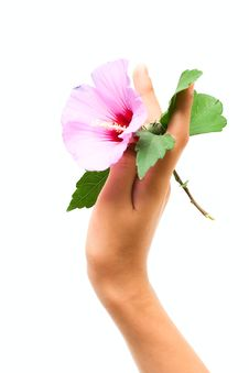Free Flower In Human Hand Royalty Free Stock Images - 8206569