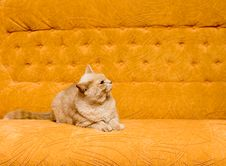 Free Cat On The Sofa Royalty Free Stock Photos - 8206608