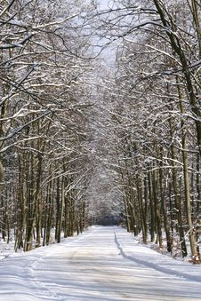 Free Winter Landscape - Forest Royalty Free Stock Photo - 8207905