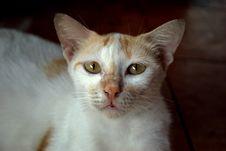 Free Stray Cat Portrait Stock Photo - 8208450