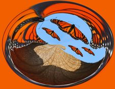 Free Monarch Butterfly Abstract Stock Photos - 8208473