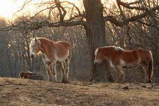 Free Horses Under A Tree Stock Image - 8208911