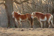 Free Horses Under A Tree Royalty Free Stock Photos - 8208918