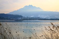 Evening On The Swiss Lake Stock Images
