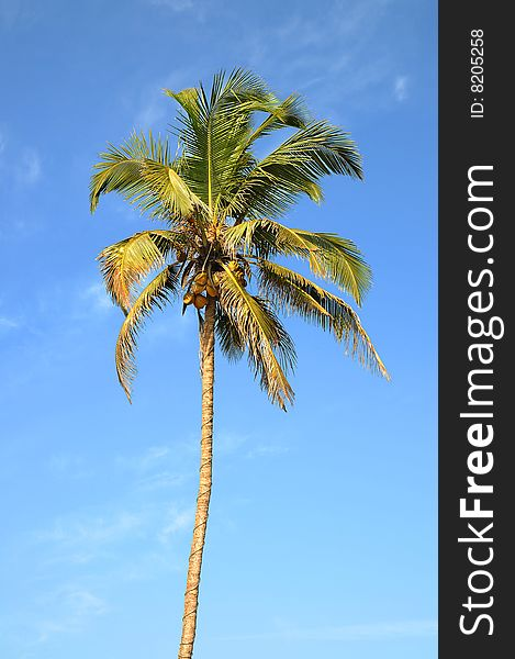 Lonely palm tree over sky