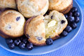 Free Blueberry Muffins On Blue Plate Royalty Free Stock Image - 8212986