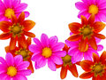 Free Flowers Decorative Stock Photos - 8215403