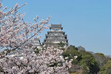 Free Cherry Blossoms At Himeji Castle Royalty Free Stock Photo - 8210415