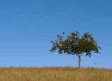 Lone Tree Against Blue Sky. Stock Image