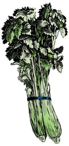 Free Vintage 1950s Celery Royalty Free Stock Photo - 8211245