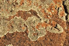 Free Lichen Boulder Background Royalty Free Stock Photography - 8211597