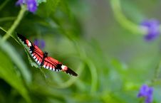 Free Butterfly Stock Images - 8212094