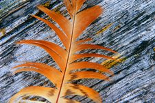 Free Feather And Wood Royalty Free Stock Image - 8212536