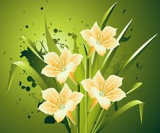 Free Spring Flowers Stock Images - 8212814